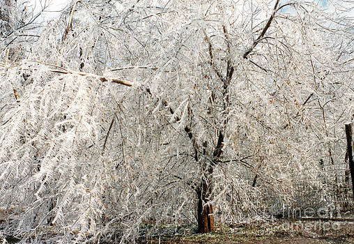Linda Rae Cuthbertson - Ice Storm - Heavy Laden Tree