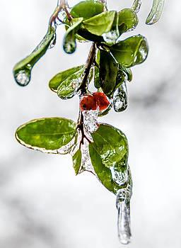 Ice Storm by Shey Stitt