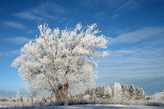 Ice Tree by Brady D Hebert
