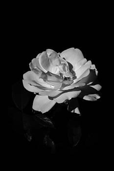 Charles Lupica - Iceberg rose