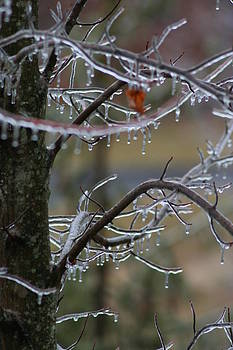 Iced by Anita Parker