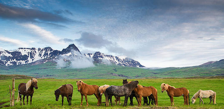 Icelandic horses in mountain landscape in Iceland by Matthias Hauser