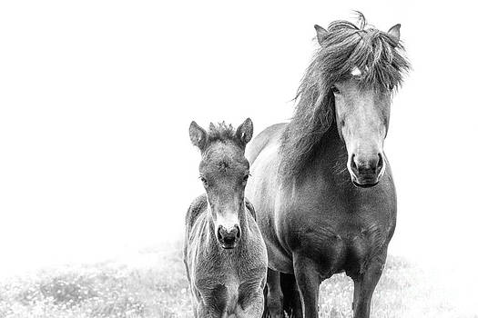 Icelandic Mare and Foal by Heather Swan