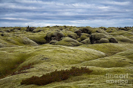 Icelandic Moss by Miso Jovicic