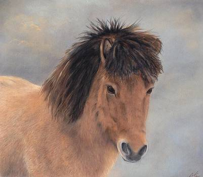 Icelandic Pony by Anne Kerr