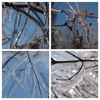 #icicles And #trees. #canonsl1 #winter by Meg Pace