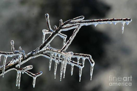 Gary Gingrich Galleries - Icy Branch-7566