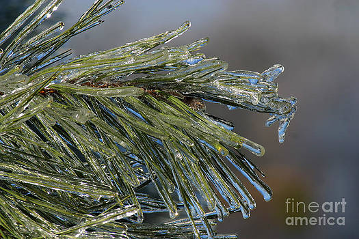 Gary Gingrich Galleries - Icy Branch-7692