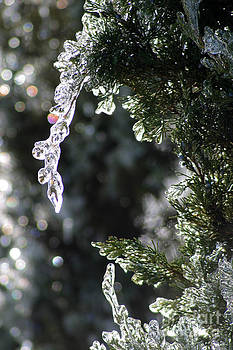 Gary Gingrich Galleries - Icy Branch-7763