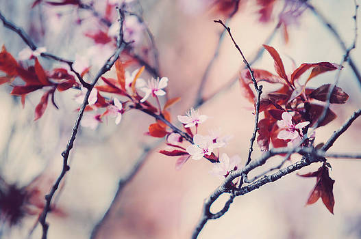 Jenny Rainbow - Icy Cherry Bloom. Pink Spring in Amsterdam