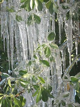 Icy Green by Deb Martin-Webster