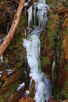 Icy Moss by Robert Pennix