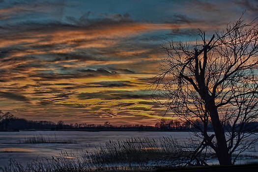 Icy Sunset with Silhouetted Tree and Grass by Donna Harding