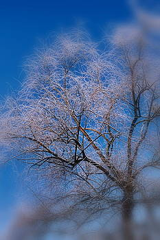 Icy Tree by Francie Davis