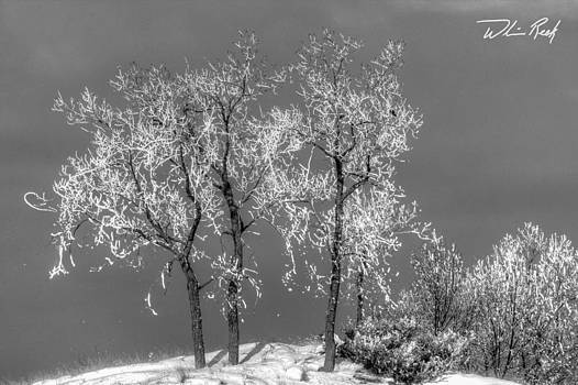 William Reek - Icy Trees on the Channel Black and White
