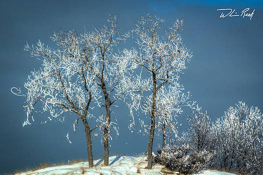 William Reek - Icy Trees on the Channel