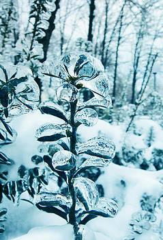 Icy by Victoria  Kostova