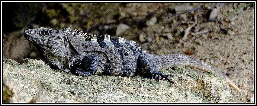 Iguana 5 by Agus Aldalur