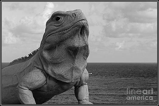 Agus Aldalur - Iguana