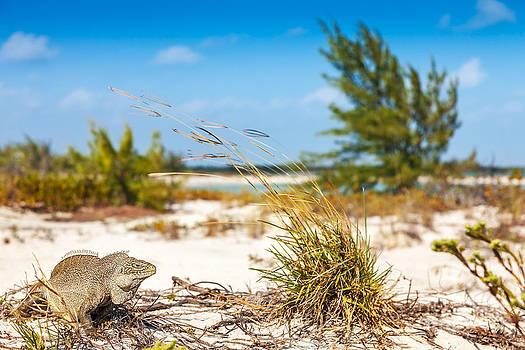 Jo Ann Snover - Iguana Cay inhabitants gave it the nickname