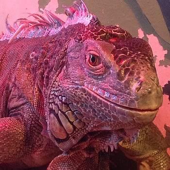 Iguana #iguana #lizard #reptile by Craig Kempf