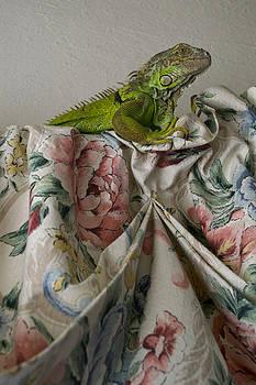 Iguana by Michelle Brown