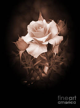 I'm a Beautiful Rose by Heinz G Mielke
