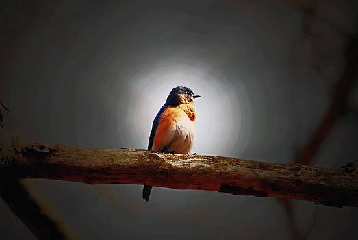 I'm a Bluebird and I'm Beautiful by Lori Tambakis