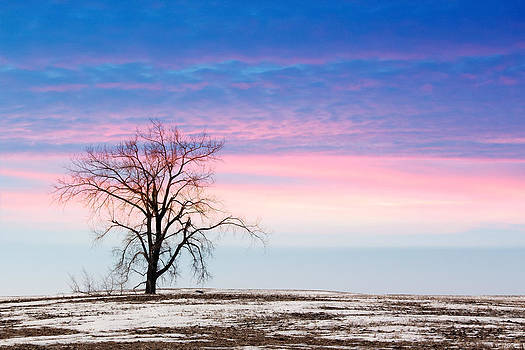 I'm Just A Tree by Christy Patino