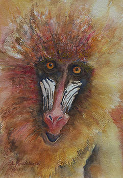 I'm Not Just a Monkey I'm a Mandrill by Cynthia Roudebush