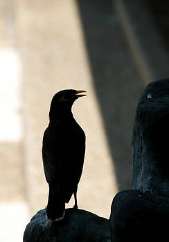 Image of bird by Pong Am