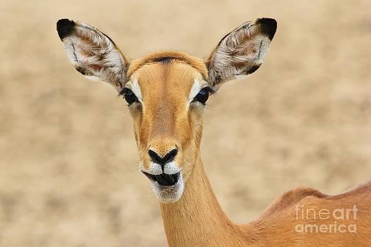 Hermanus A Alberts - Impala - Jaw dropping