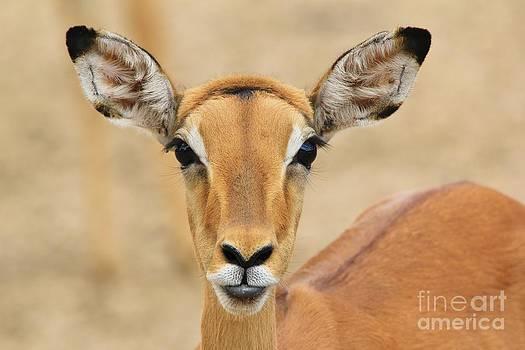Hermanus A Alberts - Impala - Who