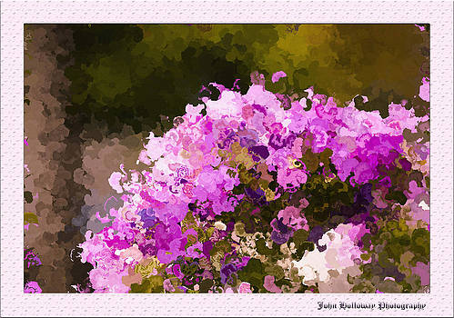 Impatiens in oil by John Holloway