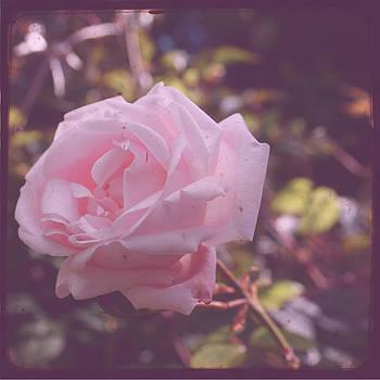 Georgia Fowler - Imperfect Rose