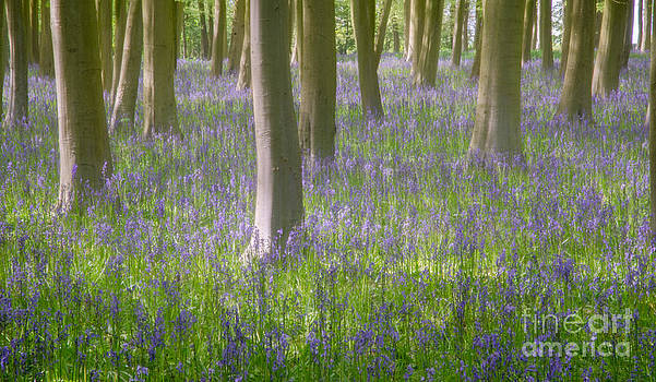 Impressionist capture of a Bluebell wood - England by OUAP Photography