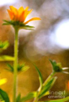 Impressionistic Flower by Jay Nodianos