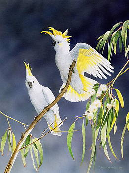 In a Shaft of Sunlight - Sulphur-Crested Cockatoos by Frances McMahon