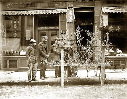 California Views Mr Pat Hathaway Archives - In Almond Blossom Time San Francisco Chinatown circa 1912