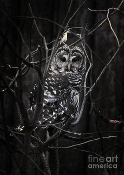 In Darkness He Waits by Lynn Jackson