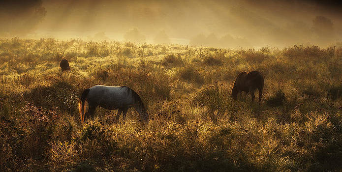 In Fields of Gold by Ron  McGinnis