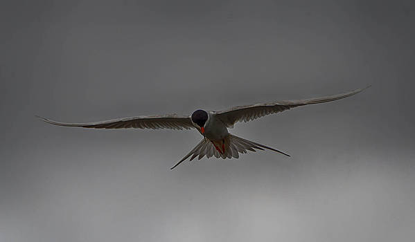 In flight 3 by Todd Heckert