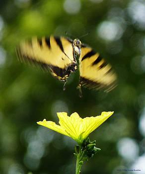 In Flight by Ella Buntin