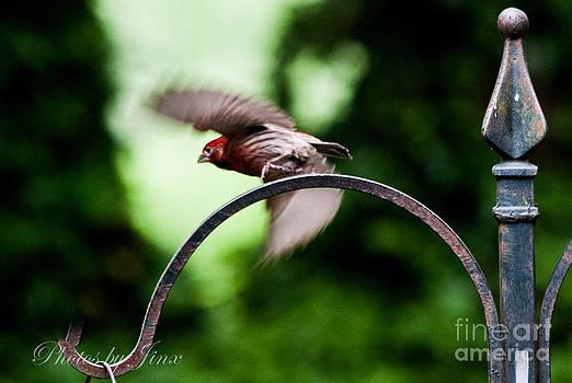 In Flight by Jinx Farmer