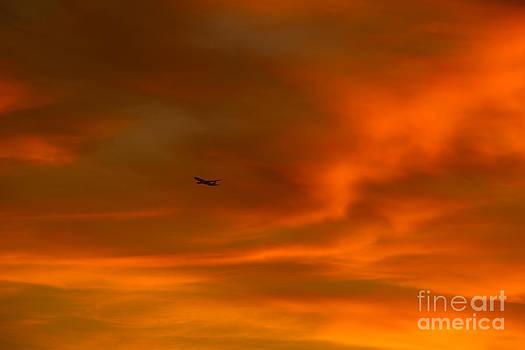 In Flight Through Amber and Orange by Nicholas Tancredi