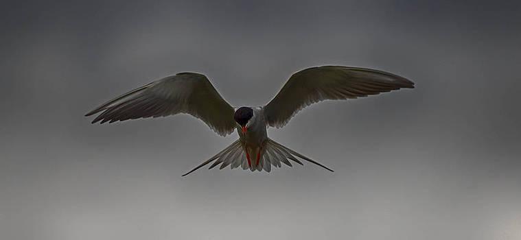 In flight by Todd Heckert