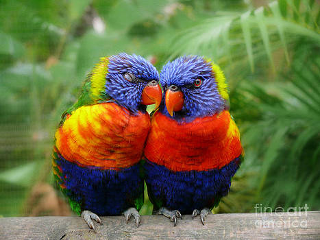 In Love Lorikeets by Peggy Franz