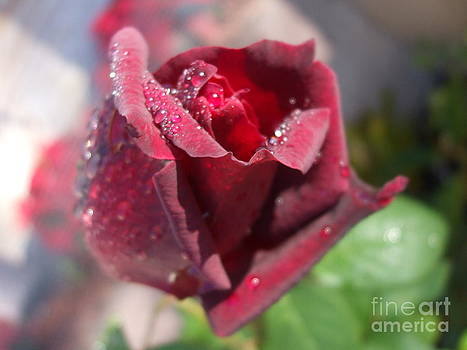 The Heart of a Rose by R and E Photography