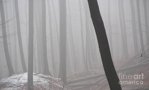 in middle of foggy forest in Matra in Hungary by Mahsa Watercolor Artist