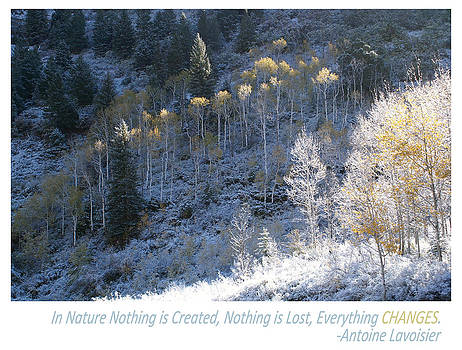 In Nature Everything Changes by Shawn Shea
